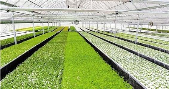 探秘|刘强东的植物工厂