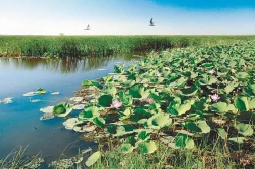 三农日报|阿里大动作进军农业领域;国家以奖代补鼓励农村电商