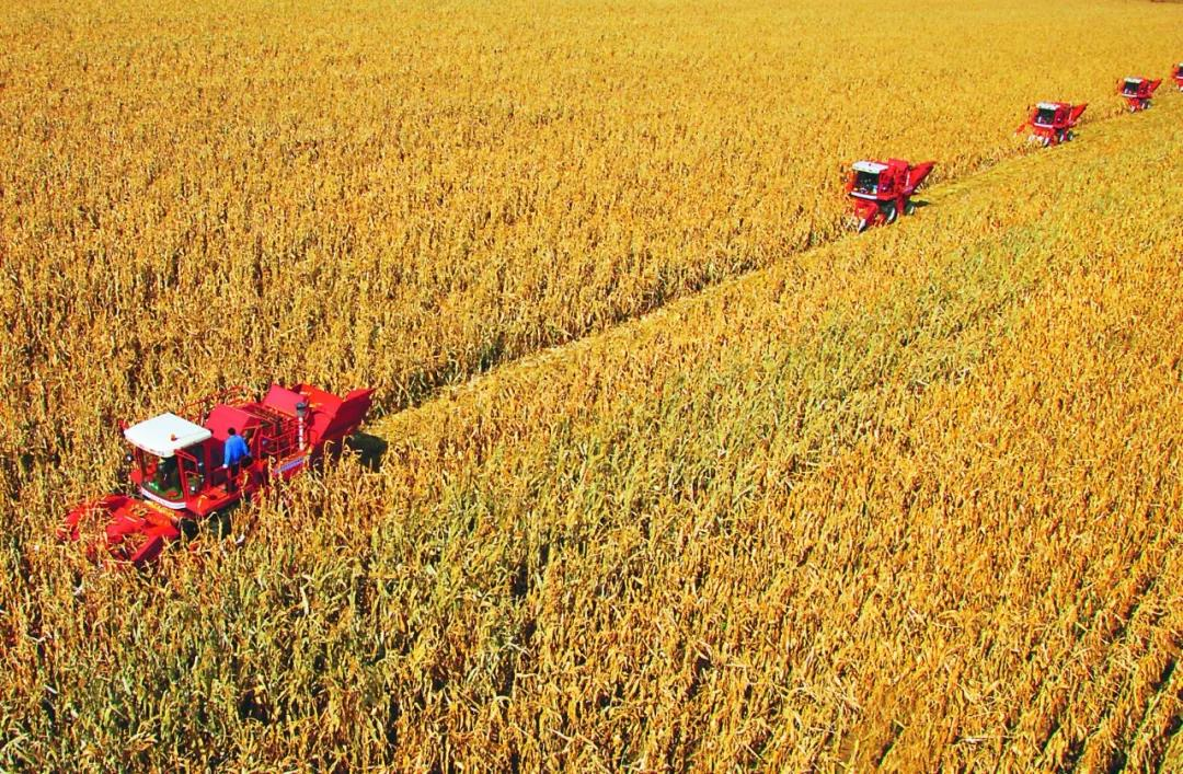 三农日报|数字显示:生鲜电商属于头部生鲜;2018年秸秆补贴金额千万级别;