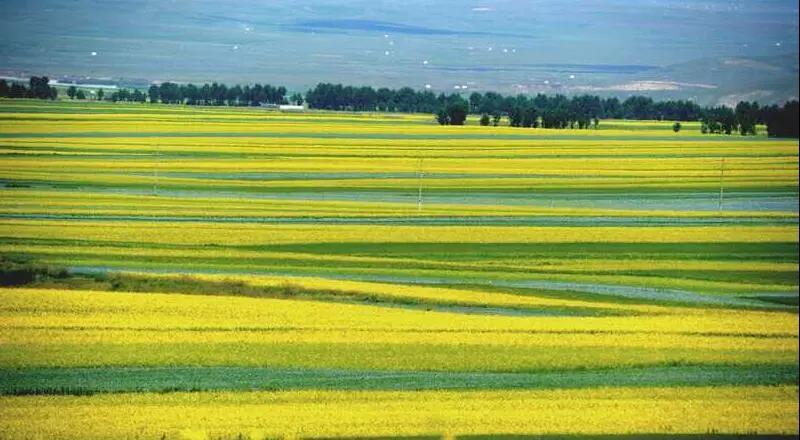 农业产业周报|农村电商发展依然迅猛;地方政府用金钱激励职业农民;