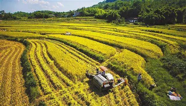 三农日报|马云:阿里电商思路主要是帮小公司赚钱;地方大学生农业创业最多可奖30万元