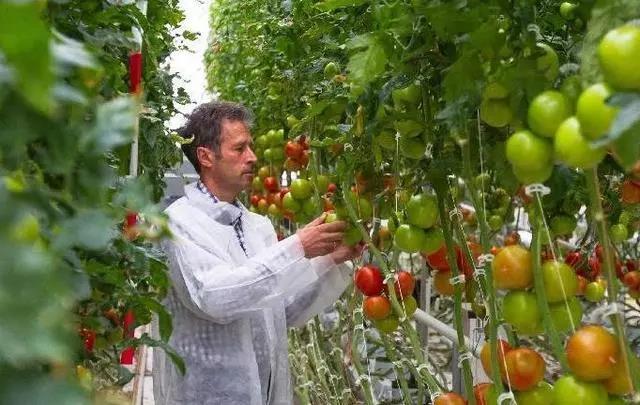 三农日报|报告:2018社区电商实现整体盈利;国外或将基因编辑技术应用于农业
