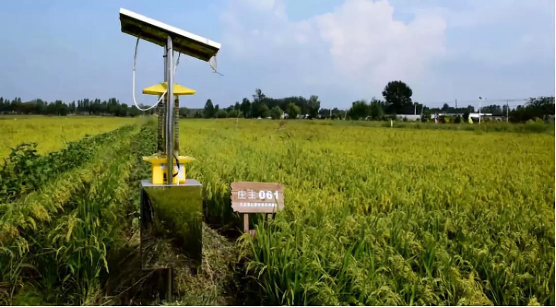 三农日报|河北出台三年净土计划;社交电商的三大运营模式;什么是认养农业?