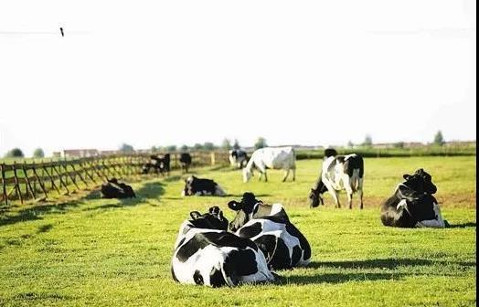 三农日报 专家预测:未来5年人造肉市场规模破百亿;农村电商模式转变:电商扶贫