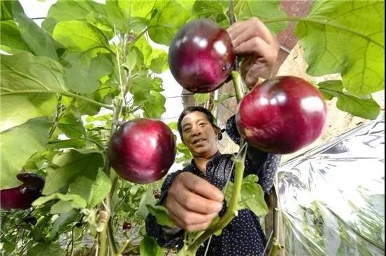 三农日报|政策又来了!!!中央财政支持合作社、家庭农场;我国涉农电商平台达3万多个
