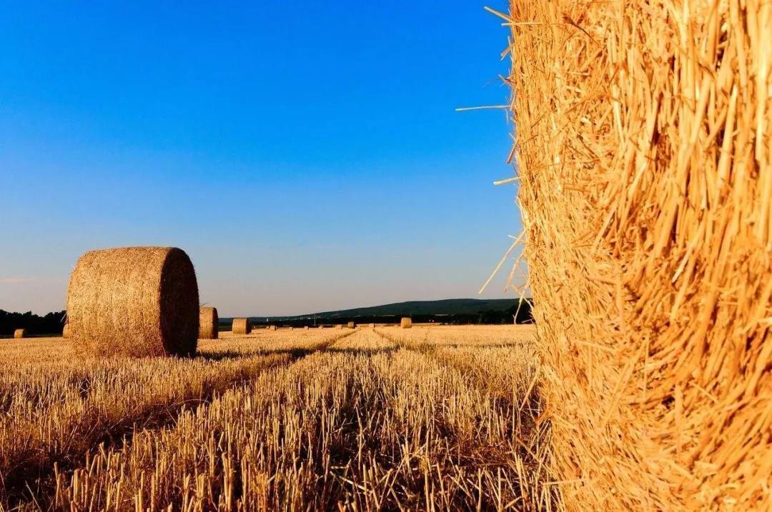 农业产业周报 京东、温氏股份、中储粮等企业最新动态;本周有4笔融资事件