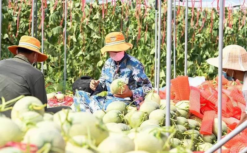 """助农必将升级:中国农业不仅仅需要""""救火员"""",但更需要""""医生"""""""