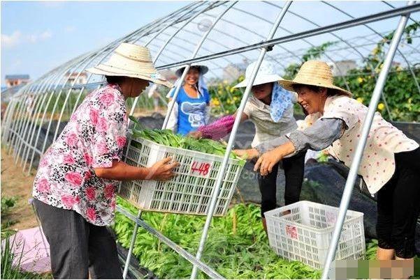 新电商时代,农民合作社卖货如何顺势而为(附3点建议)