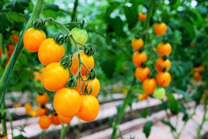 农业产业周报|大北农、隆平高科、拼多多、北大荒最新动态