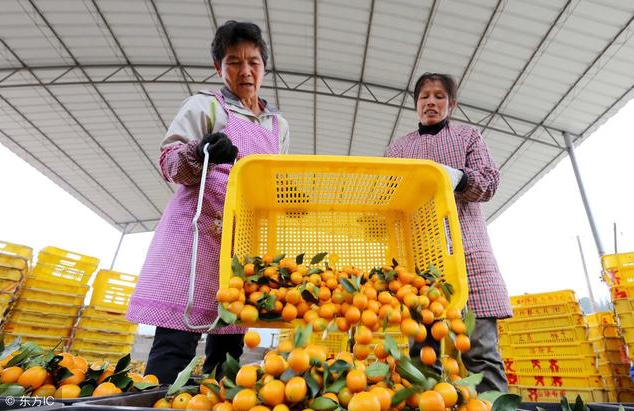 电商缝合农产品供应链 人力不足成瓶颈