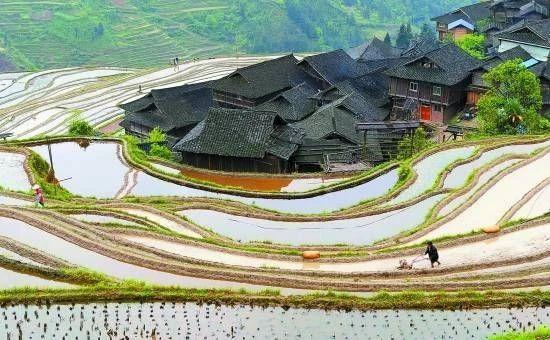 三农日报|数据显示:农村电商达23亿规模;报告:玉米行业或将迎来拐点