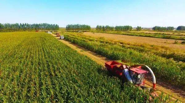 三农日报|我国将支持种业龙头创新发展;业内人士:农村电商已经开始产业化