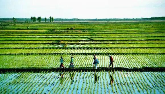 【农业商业模式解析】2C农业模式,干农业的人都应该重视