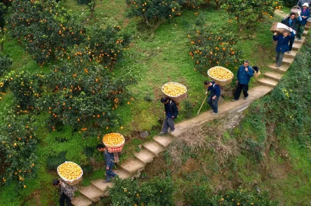 【商业案例】拼多多为什么要扎根农业?