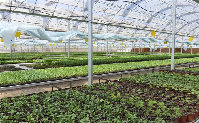 三农日报|2018年粮食种植面积有望增长;大疆商业模式仍待建立;2018年农产品价格或下跌