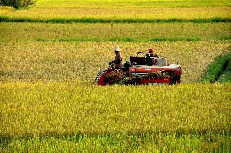 三农日报|中央累计投入农机购置补贴2000多亿元;农业农村部:转基因技术安全性可控