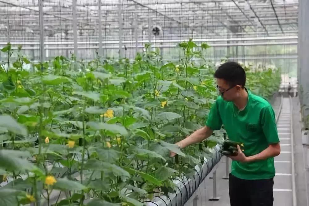 农业产业周报|(2019.4.15—4.21)