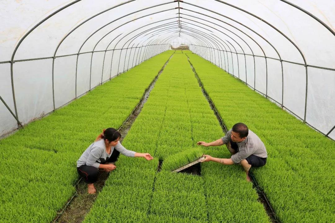 三农日报|数据:生鲜电商行业仍依靠融资烧钱来抢夺市场;预测:农用无人机前景广阔