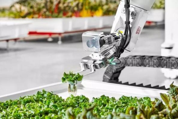 未来农业的雏形:室内机器人商业农场