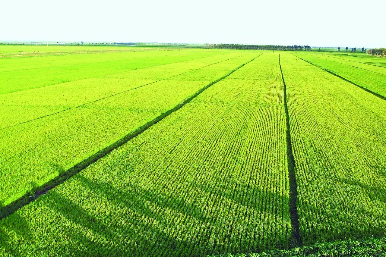 【海外农业】美国农业模式不适合中国:警惕土地流转骗局