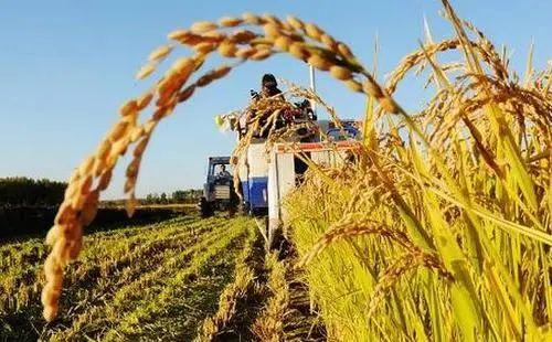 【农业服务】30个!全国农业社会化服务典型