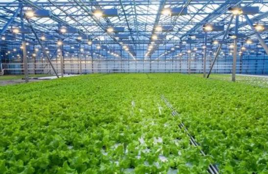 农业产业周报|大疆农业、西王集团、祖名股份、七河生物最新消息
