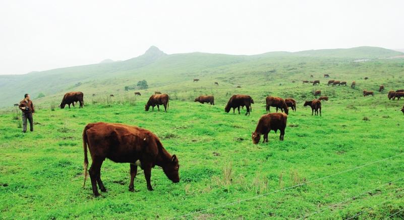 养殖资本风起云涌,生态养殖成未来风口,但风险与机会并存