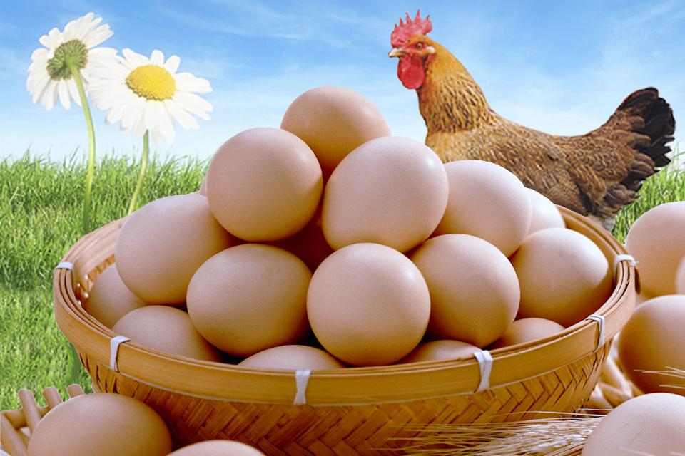 鸡蛋养殖业陷入亏损!整个养殖业都在寻出路 锐观察