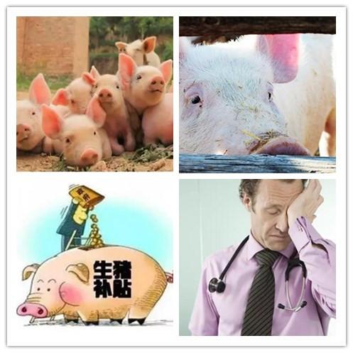 探究|2018年或是养猪人灾年!但养猪大户为何扩大规模
