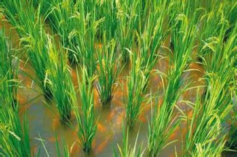 重磅|农业部发话:未来将大力扶持这群搞生态种养的人(附申报条件)