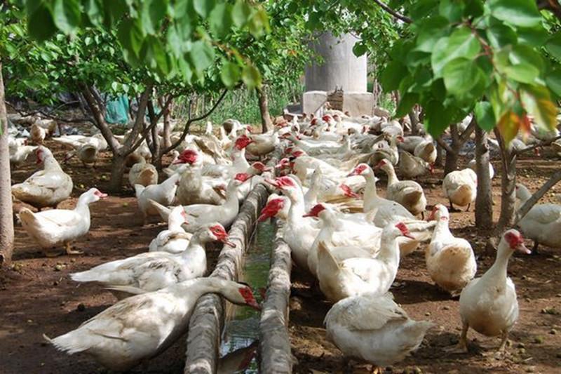 """""""畜禽禁养""""矛盾升级,却牵出农业另一个千亿商机!"""