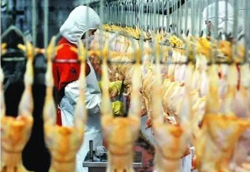 养殖业流通或破局:开生鲜门店,这不是温氏最后一招!