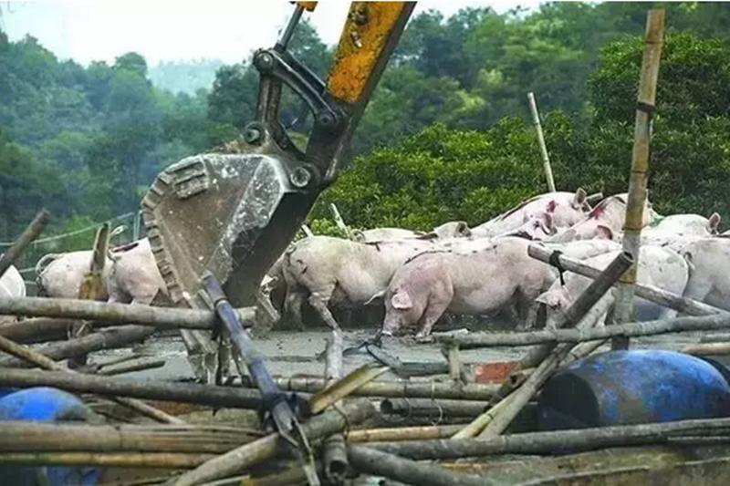 农业部回应:猪场拆迁,怎么保护养殖户利益?畜禽粪污,国家会出钱治理吗?