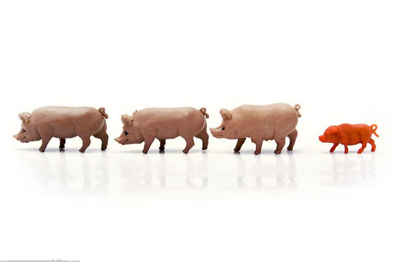 生猪|猪价动荡下行,玉米豆粕难维持强势