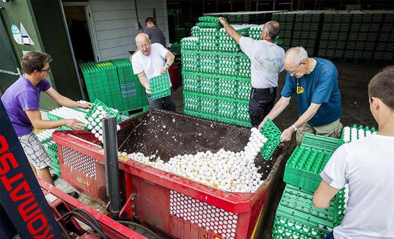 欧洲毒鸡蛋蔓延农户损失惨重,比利时农业大臣拟民事索偿