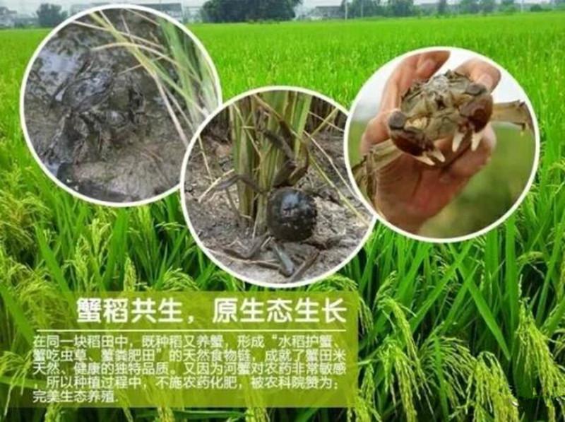 稻蟹综合种养亩均纯收入7189元,效益就是这么高!
