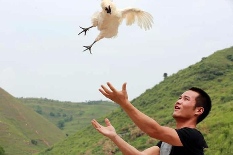 退伍兵哥杨锐返乡养鸡带村民致富,年销售额150万利润有40万
