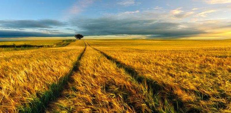 农业是下一个产业发展风口