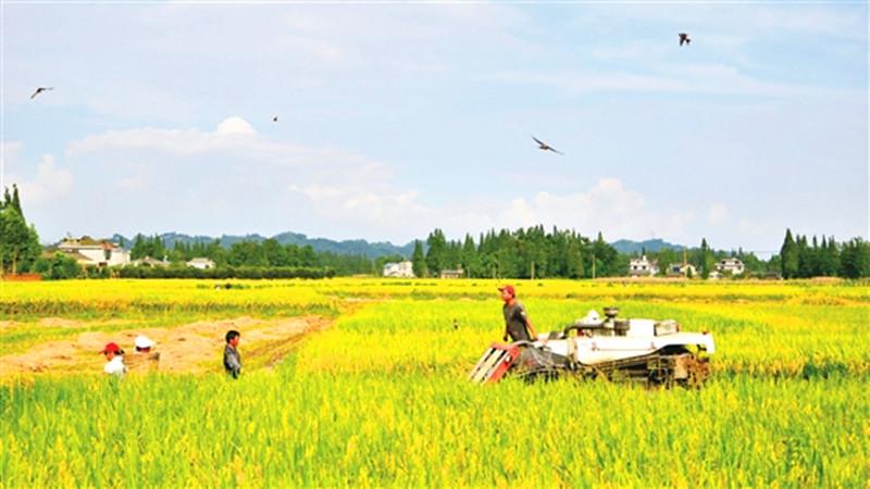三农日报|知识!啥叫农业产业联合体;大北农欲成为养猪综合服务企业