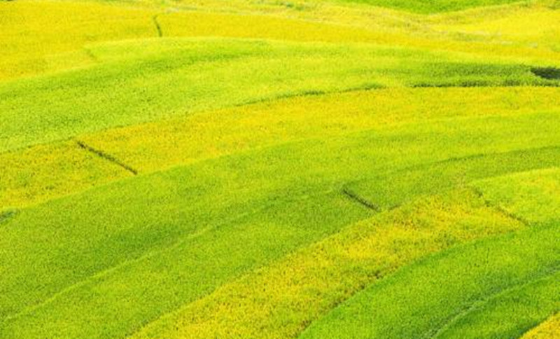 2018年想赚钱的农民快来看,这个养殖项目月过几万,有赚头!