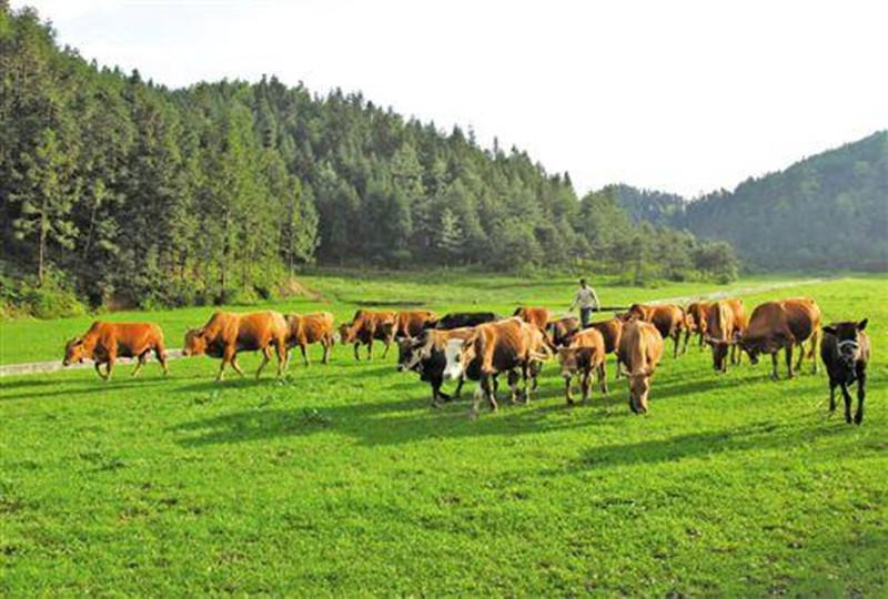 在农村搞养殖想赚钱,有四点一定要做好!