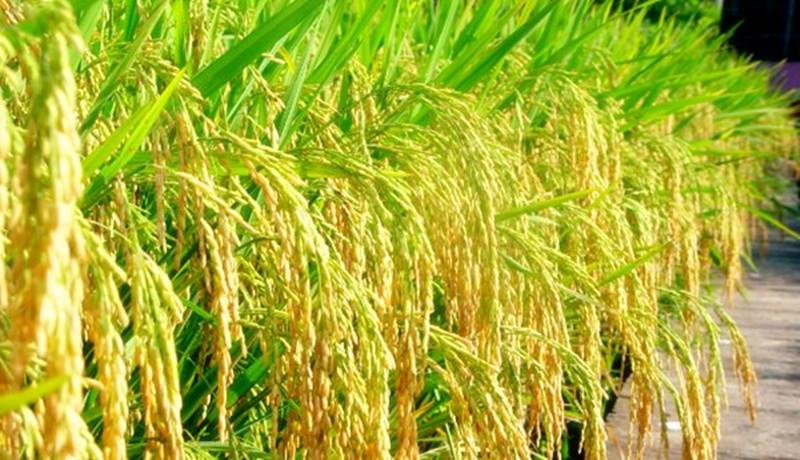 一周回顾|农业产业10大事件盘点(1127--1203)