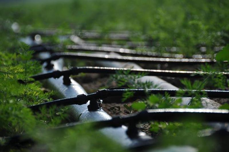 以色列农业为什么全球第一?因为拥有这10种其他国家做不到的技术