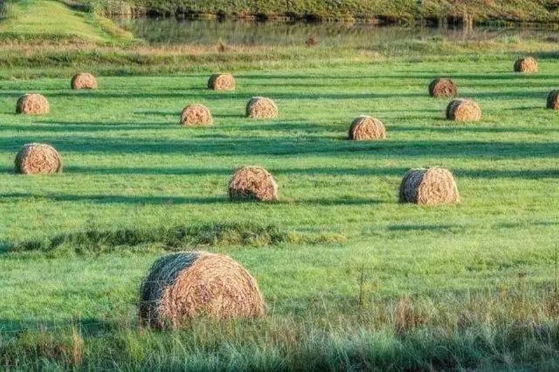"""农业人年底抓紧提前布局挣""""巧钱"""",这几个农业产业新一轮红利开启了!"""