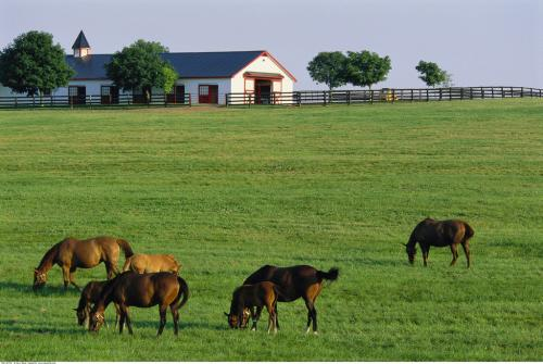 2018年养殖业有大动作,养殖户们要尽早知道这3点!