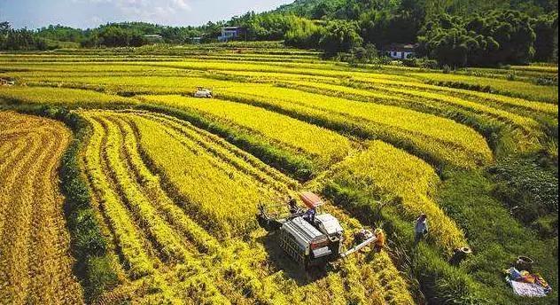 """未来,这种农业生产经营形式仍是主流!三农专家教""""小农户""""对接""""大市场"""""""