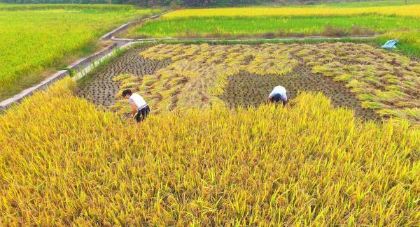 三农日报|中国的养猪业的3大痛点;微生物技术是未来农业的希望