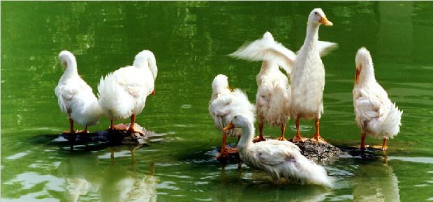 """大开眼界的养殖法:大棚养猪、""""大学宿舍""""模式养鸡,佩服佩服!"""