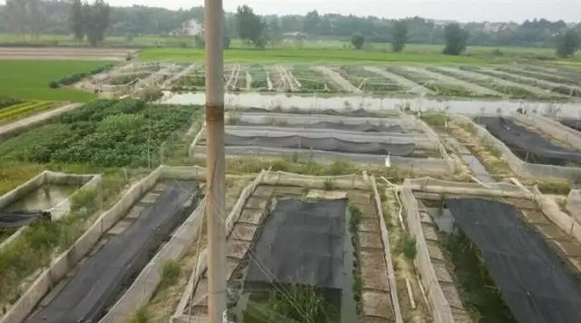 养殖狂人返乡创业,水产养殖年入1000万,他是怎么做到的?