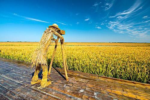 干货|认养农业:操作简单、赚钱快(新农民必看)